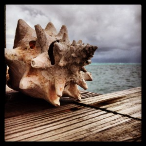 I took this pic on the dock.  Conch thrive in this area - and this might possibly be my favorite.