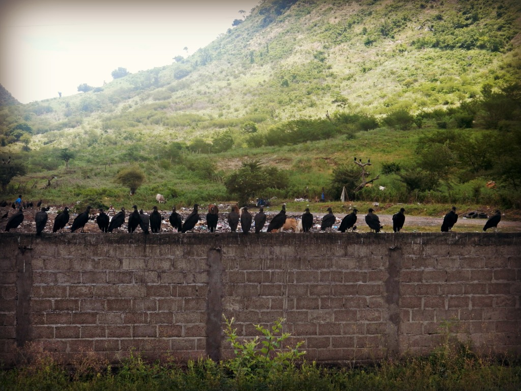 buzzards on wall edited