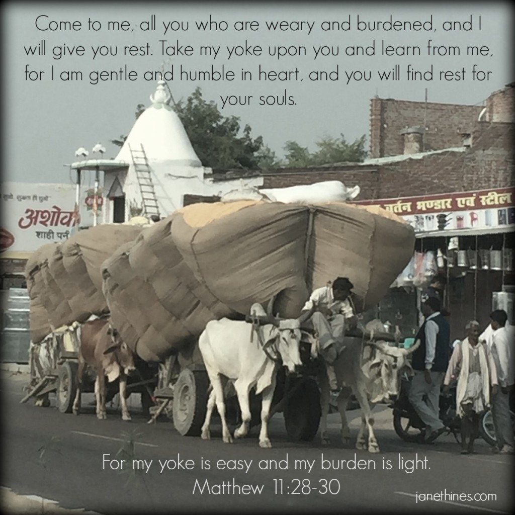 I took this picture from the vehicle as we were traveling into Northern India in November 2015. Most of us could never lift even a sack of this grain - let alone pull this huge load like these skinny oxen are doing and from where I was sitting - it looked effortless. When my load feels this big, Jesus tells me to give it to Him - it is not too much for Him to carry. He is standing ready to take it. The crazy thing is how we give it to Him and then find ourselves taking it back again and struggling into exhaustion.